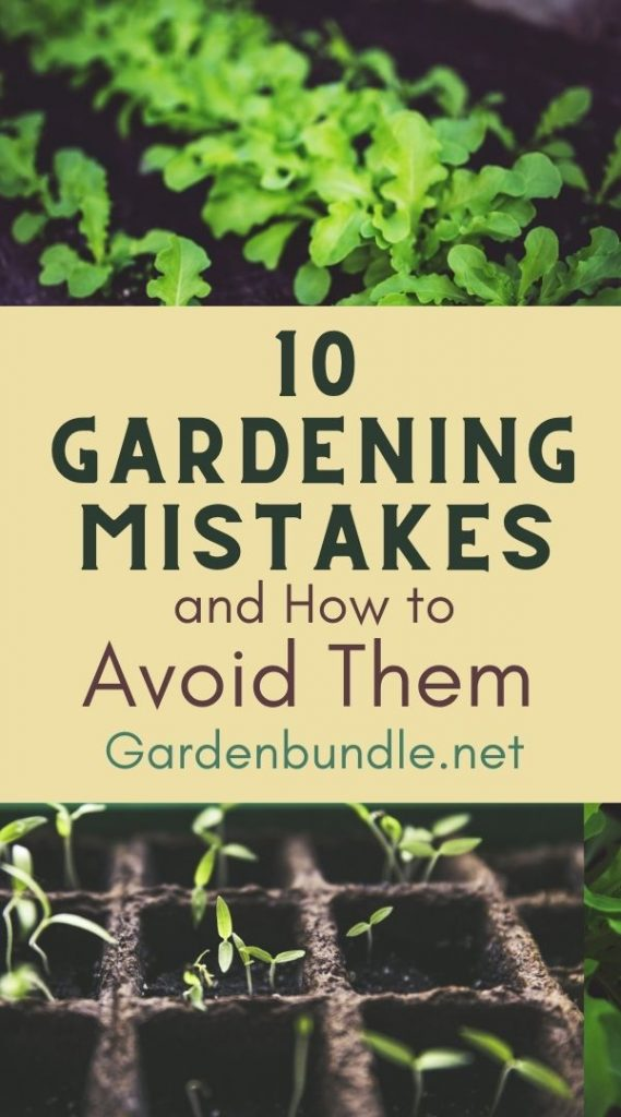 10 Common Gardening Mistakes and How to Avoid Them